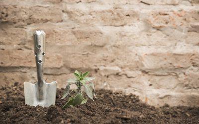 Cómo eliminar las malas hierbas en tu jardín
