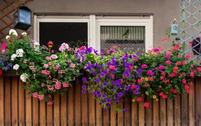 Cómo cultivar un jardín mediterráneo