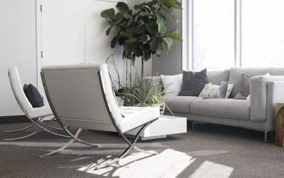 ¿Cómo cuidar de tus plantas de interior?