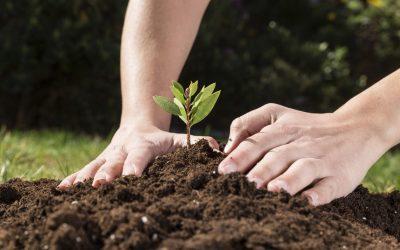 Pasos para preparar el suelo para la siembra
